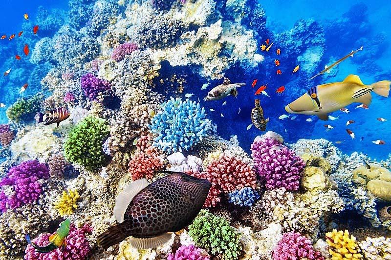 יום 8 - מעל ובתוך שונית האלמוגים הגדולה