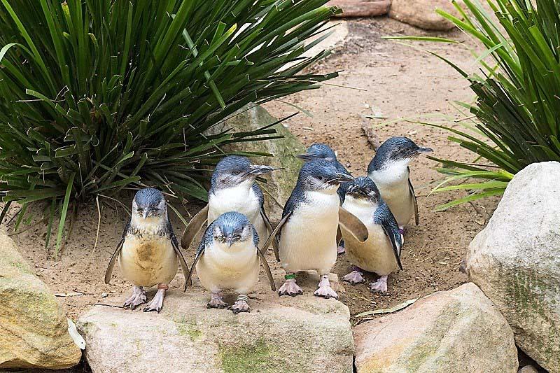 יום 15  - גן החיות של אלוהים באי פיליפ