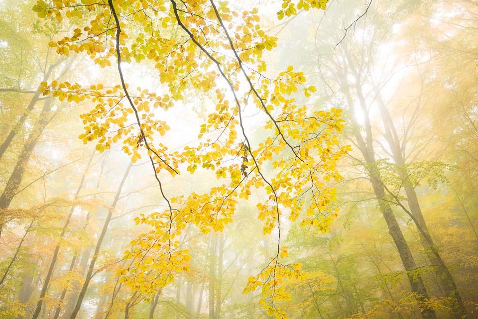 יום 5  - פייטראנסיירי, זכרון ביער
