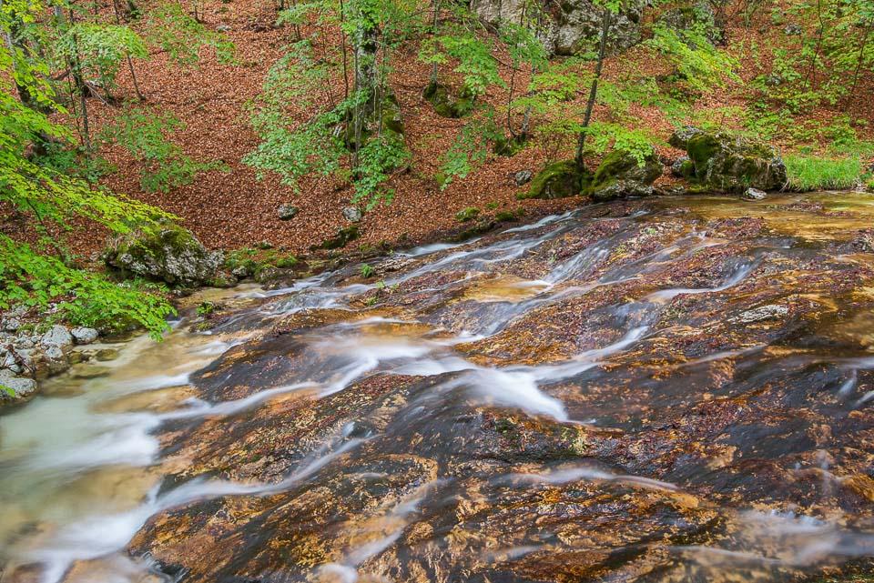 יום 6 - צ'יויטלה אלפדנה, עוד ביערות ובהרים
