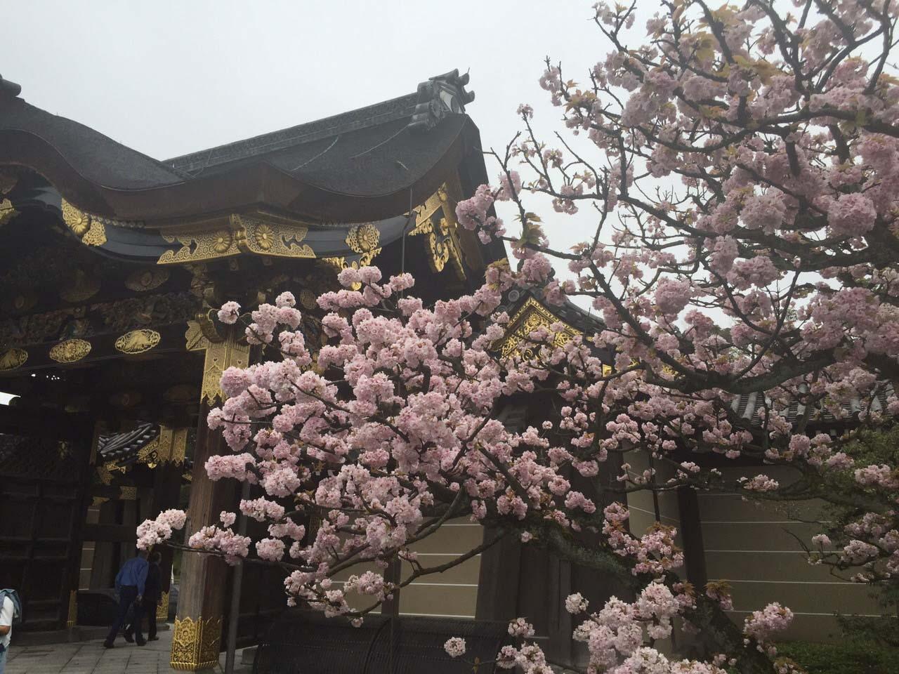 טיול עומק ליפן, כולל האי קיושו - טיול של פריחה, הרי געש, פסטיבל, היסטוריה ותרבות בארץ השמש העולה | טיולים מאורגנים | תמונה 51