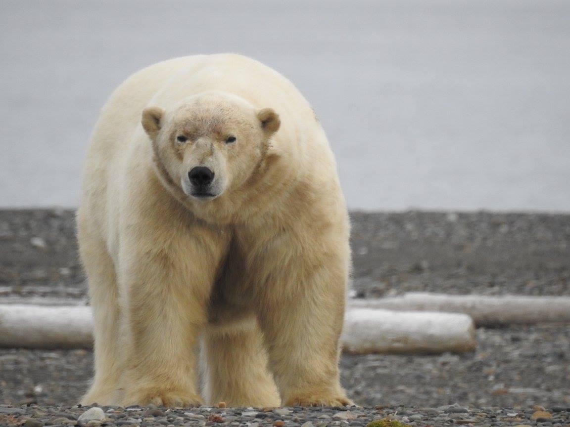 טיול לסיביר - מעבר לחוג הקוטב פגישות עם בעלי חיים בטבע הכי פראי בעולם