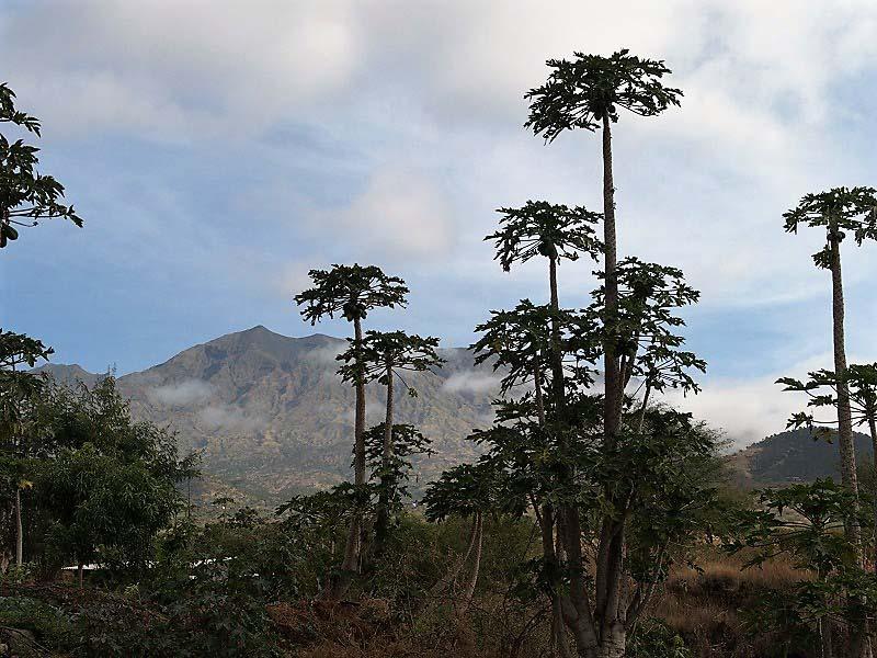 קאבו ורדה - איים באוקיאנוס האטלנטי, שהם גם חלקי סהרה, גם גן עדן ירוק