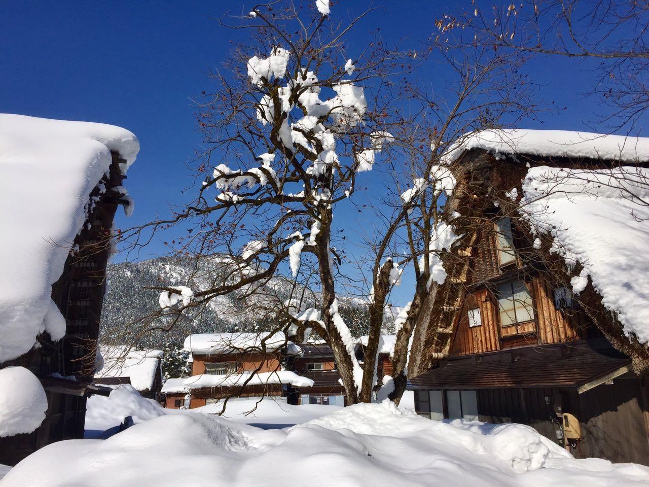 יום 10 - עוד ממראות הפלא של החורף