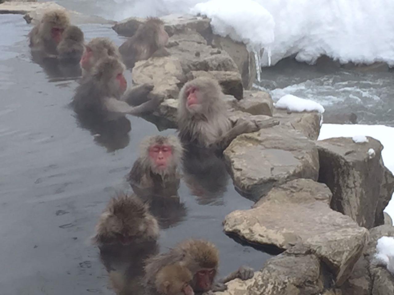 יום 7 - קופים במי הגיהנום