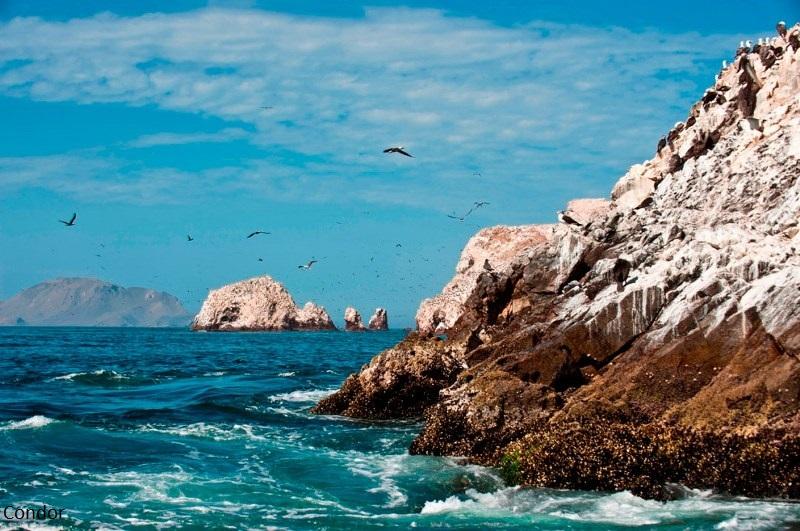 יום 15 - פאראקאס, בייסטאס; איים בזרם וממטרים ציפוריים