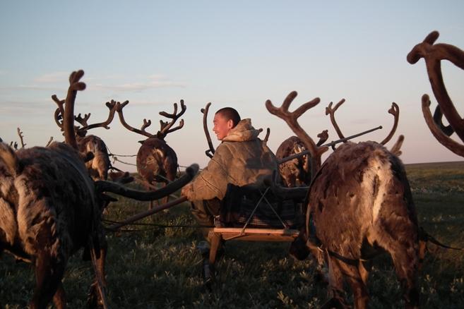 אל נוודי הצפון, רועי האיילים של אלה-קארי