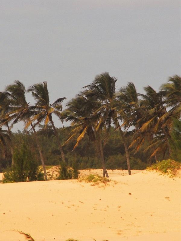יום 14 - קאזאמאנס, הדרכים האחוריות, מנגרובים ואנימיזם