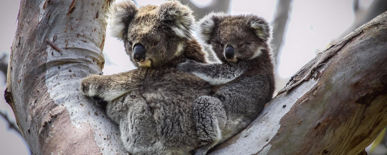 אוסטרליה - שמורות טבע, חיות, ערים ואנשים