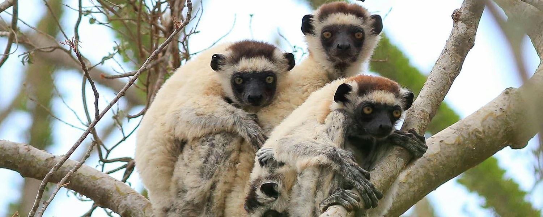 טיול למדגסקר - העולם המוזר וטבע אחר בין אפריקה לאוקיאנוס