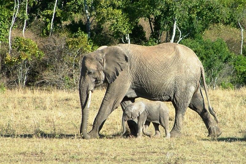 טיול ספארי לטנזניה - בחזרה לאפריקה