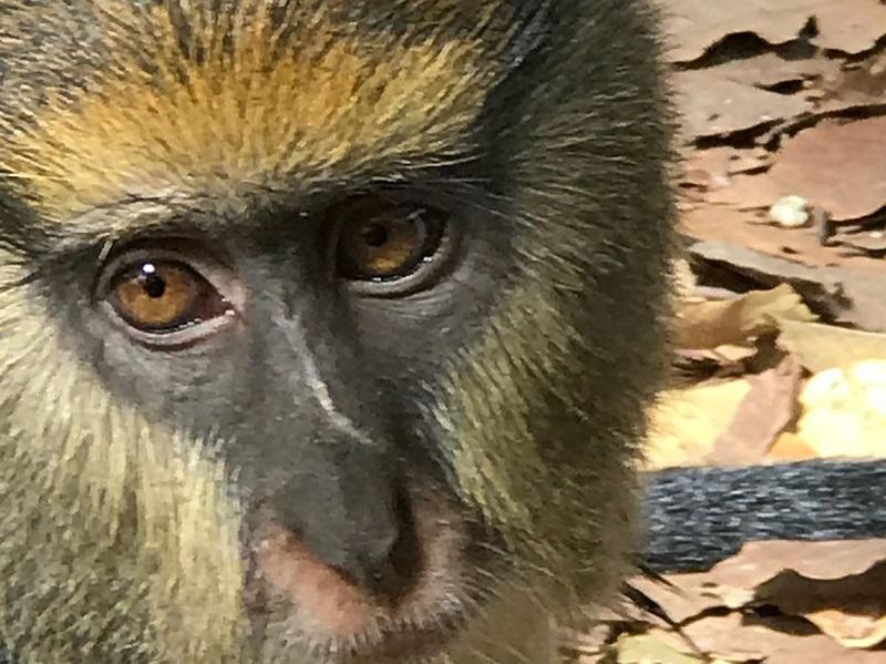 יום 7 – על קופים ועל נפלאות