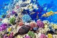 יום 13 - מעל ובתוך שונית האלמוגים הגדולה