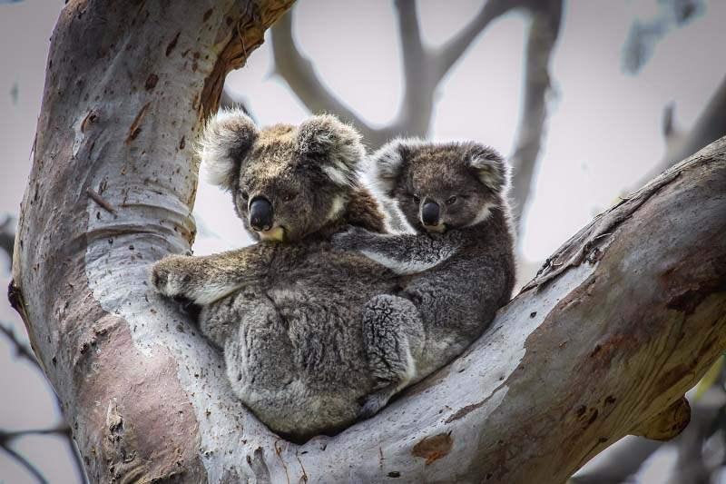 הטיול המקיף באוסטרליה - שמורות טבע, חיות, ערים ואנשים