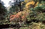 יום 5 - ביערות ובין הכפרים.  (עד גובה 3000 מ׳)