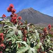 יום 9 - הר הגעש פוגו; לוע מעשן, צבעים וגאזים על פני השטח ולבה קרושה בסלון