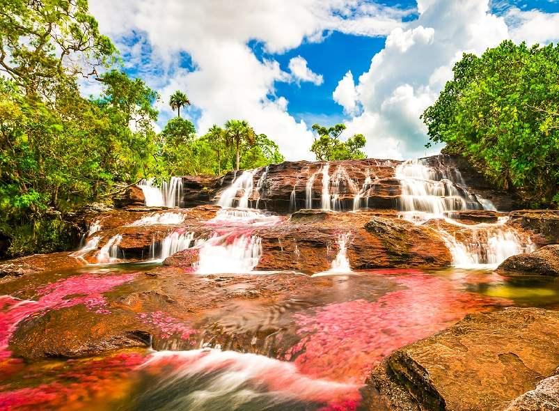 המסע לקולומביה - מה שעוד לפני האינדיאנים והפסיכדליה של צבעי הנהר