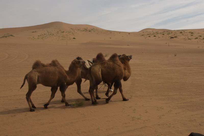 המסע המופלא במדבר גובי - חלק א'