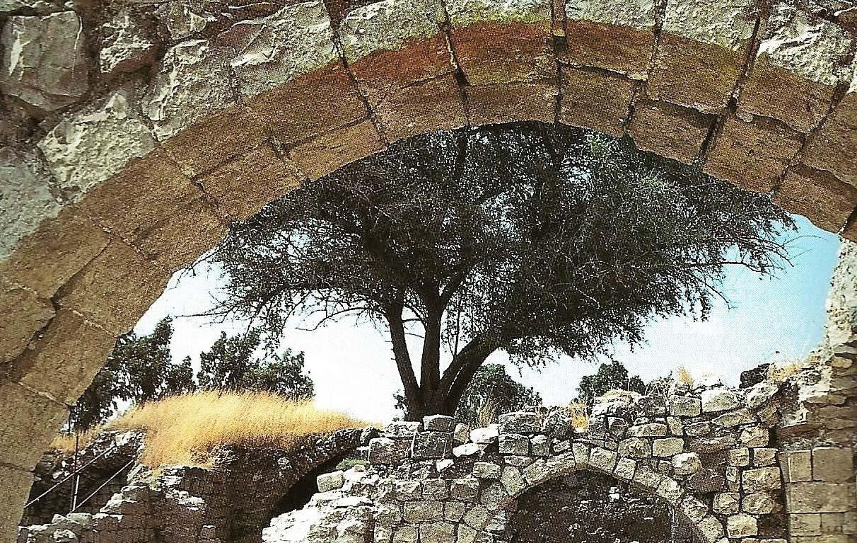 חאנים עתיקים בגולן ובגליל ופריחת החלמונית בתבור