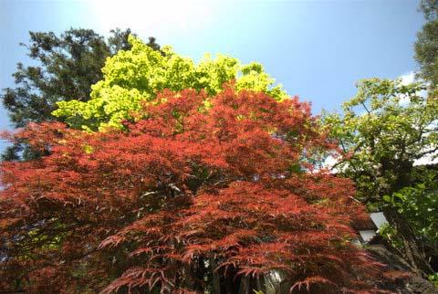 טיול ליפן - טיול נופים וטבע בשמורות ובכפרים בסתיו של יפן