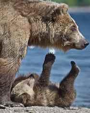 יום 4 - עם דובים רעבים לאורך הנהר