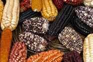 יום 5 - פיסאק;  עוד מן העבר בתלת ממד, שוק ותירס וכל מיני