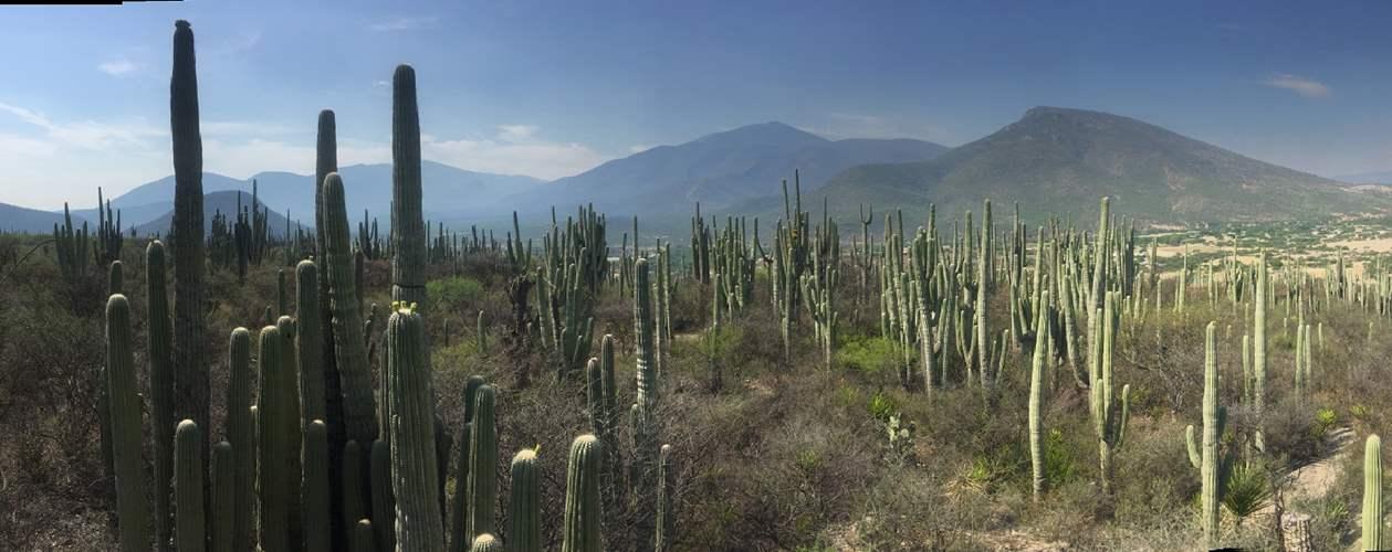 לטייל במקסיקו -בחגיגות הצלב הקדוש, יוקטן ומסע עומק אל תרבות וטבעה